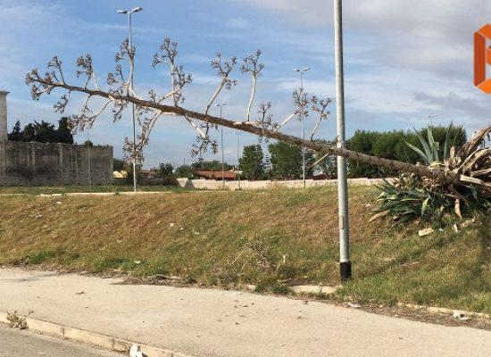 """Parcheggio Conca dei Monaci, grosso """"albero"""" rasenta la strada"""