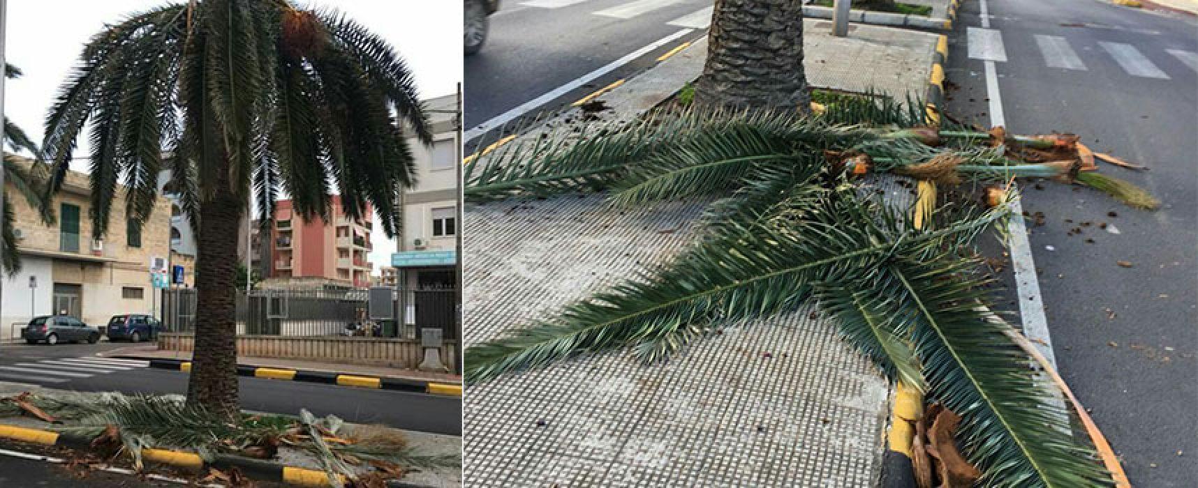 Palme distrutte dal punteruolo rosso, Attivisti a 5 stelle lanciano appello
