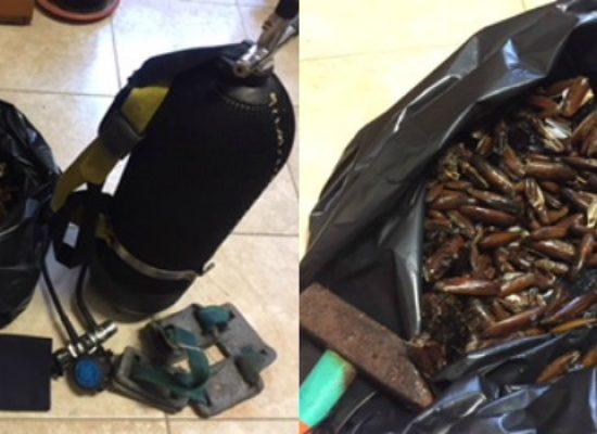 """Sequestrati 5kg di datteri in zona """"anfiteatro"""" da parte della Guardia Costiera"""