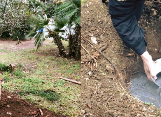 Le ceneri del cane di quartiere Ringo sepolte in villa comunale