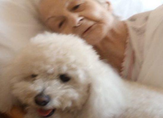 """Hospice, 93enne accarezza il suo barboncino prima dell'addio: primo caso di """"pet visiting"""" in Puglia"""