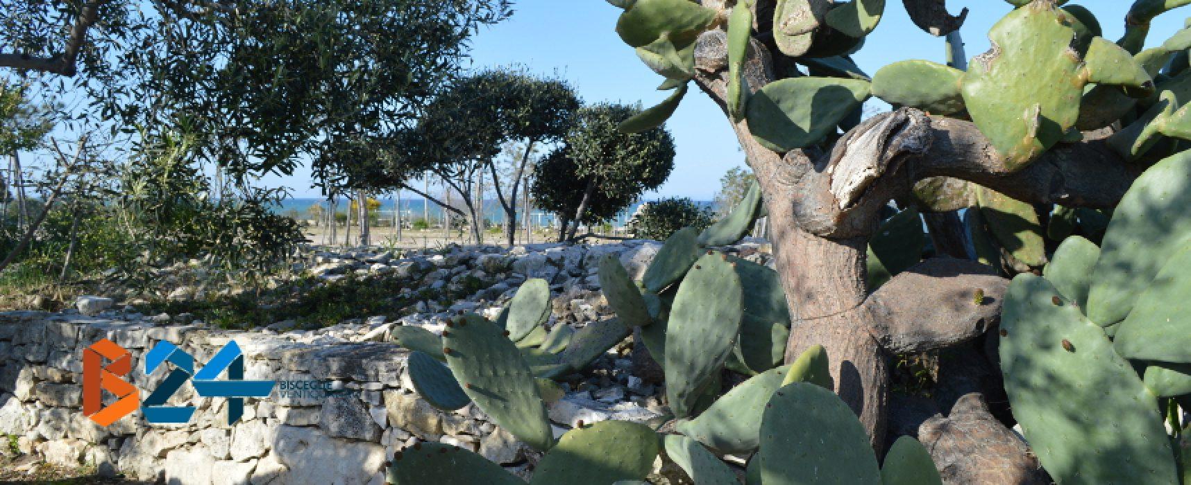 """""""Brezza tra gli ulivi"""" riconosciuta Masseria Didattica di Puglia, gli auguri dell'assessore Di Gioia"""