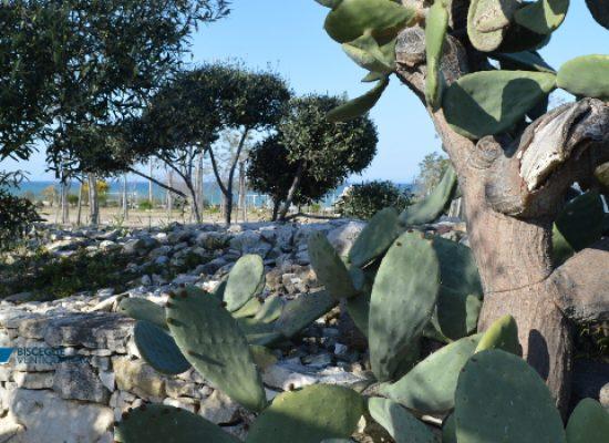 """""""Aria di Masseria"""" a Brezza tra gli ulivi, il 4 agosto si celebra la Puglia"""