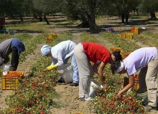 Lotta allo sfruttamento di manodopera stagionale, protocollo Caritas-Flai-Cgil