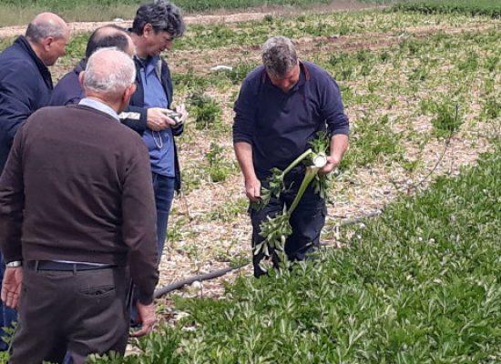 Funzionari regionali e Agrinsieme verificano danni gelate nell'agro biscegliese