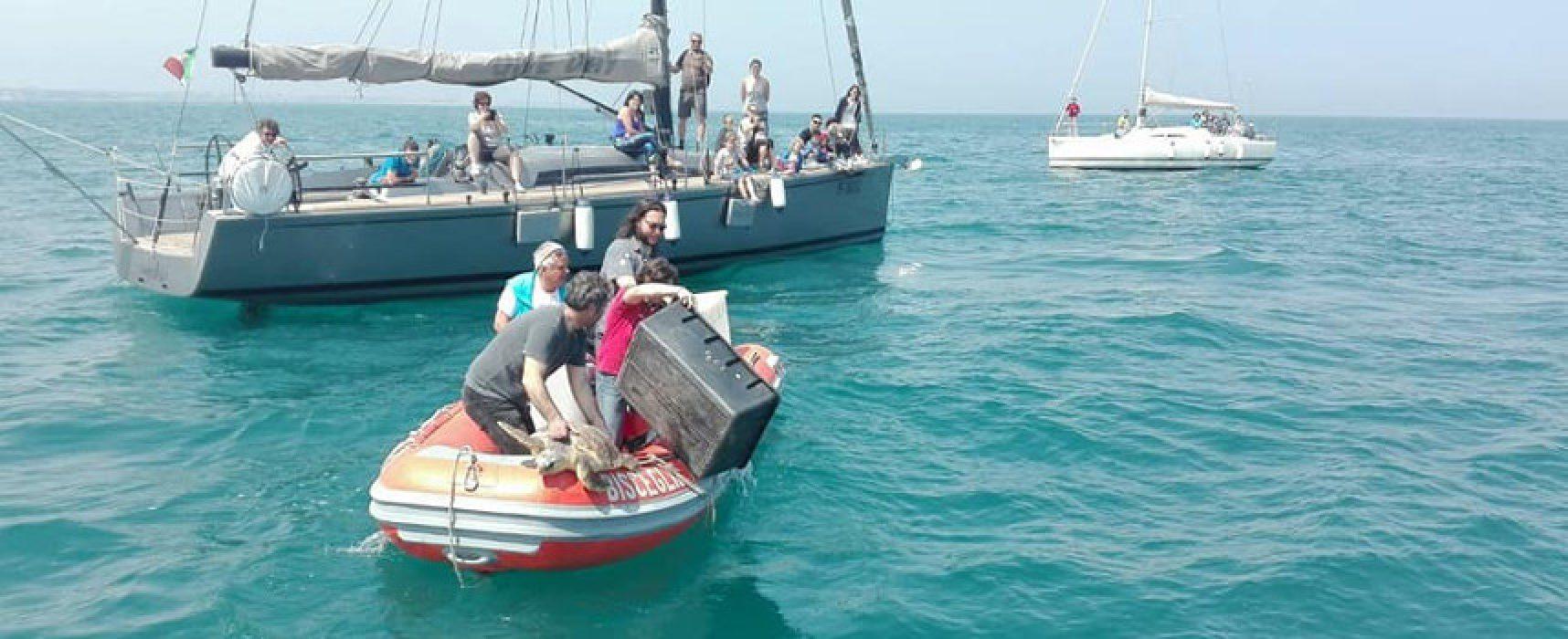 Tre tartarughe marine caretta caretta liberate nel mare di Bisceglie