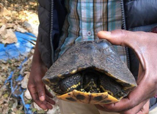 Giardino botanico, trovate due tartarughe sopravvissute ad anni di abbandono