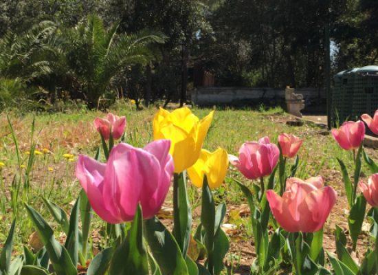 Mattinata dedicata all'educazione ambientale al giardino botanico Veneziani