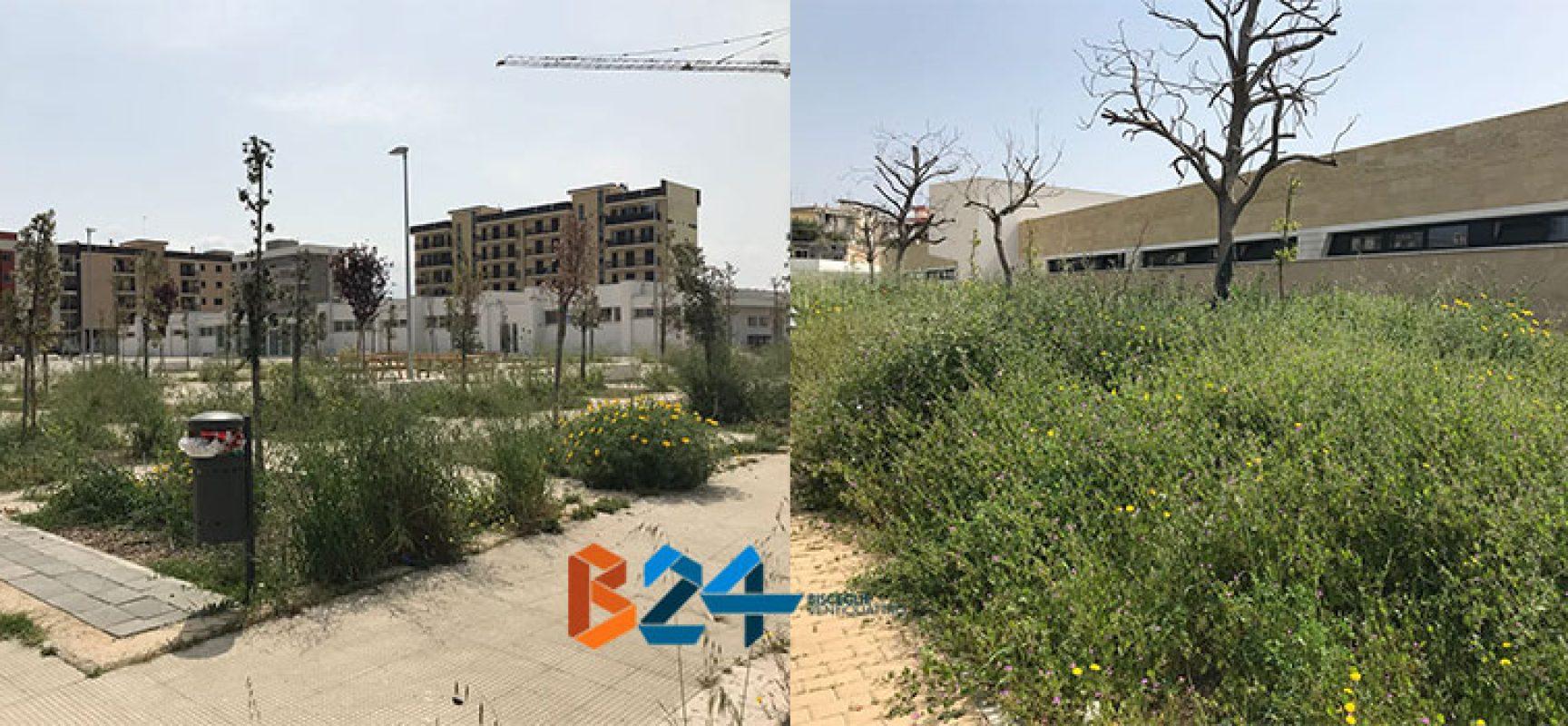 Verde pubblico, manutenzione assente nei pressi di alcune scuole / FOTO