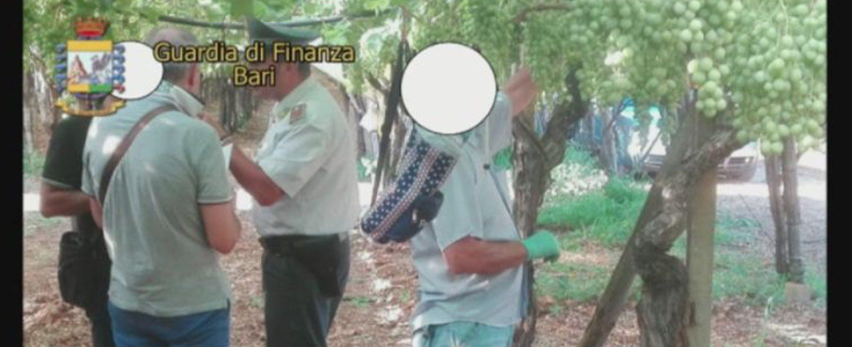 Caporalato: domiciliari sostituiti con obbligo di dimora ai tre arrestati