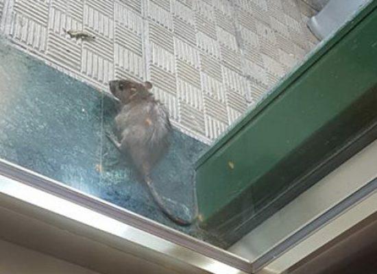 """Amendolagine (M5S): """"Fai la differenza non sta funzionando, città ancora sporca e con topi"""""""