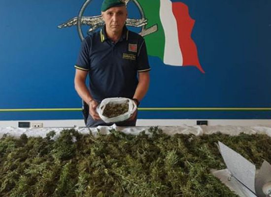 Aveva piccola serra di marijuana in casa, arrestato trentenne biscegliese