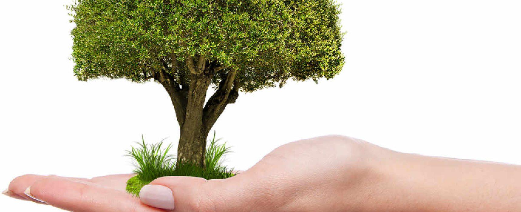 Giornata nazionale degli alberi, attivisti 5 stelle rinfoltiscono il verde cittadino / DETTAGLI