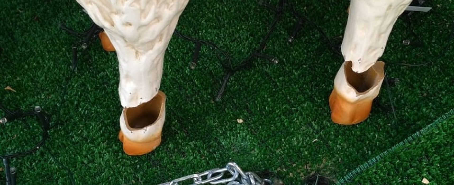 Tentato furto di una pecora di plastica alla Grotta della Natività del Gruppo Scout Bisceglie