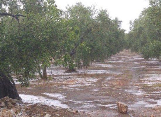 Gelate 2018, conferenza di Confagricoltura Bari-Bat su stato di calamità naturale