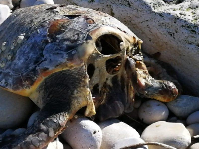 """Tartarughe marine decapitate per superstizione, l'appello del WWF: """"Chi sa parli!"""""""