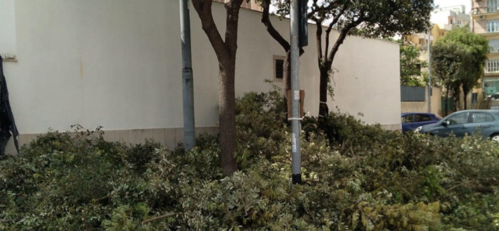"""Salvemini (WWF): """"No potature e abbattimenti alberi in questo periodo, il comune si fermi"""""""