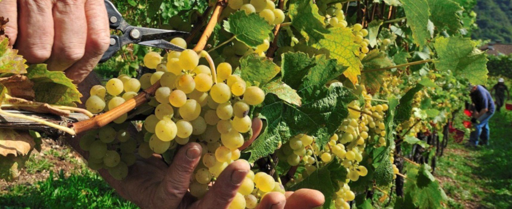 """""""Viticoltura: mercato, formazione e sostenibilità"""", incontro su mercato e vino pugliese"""