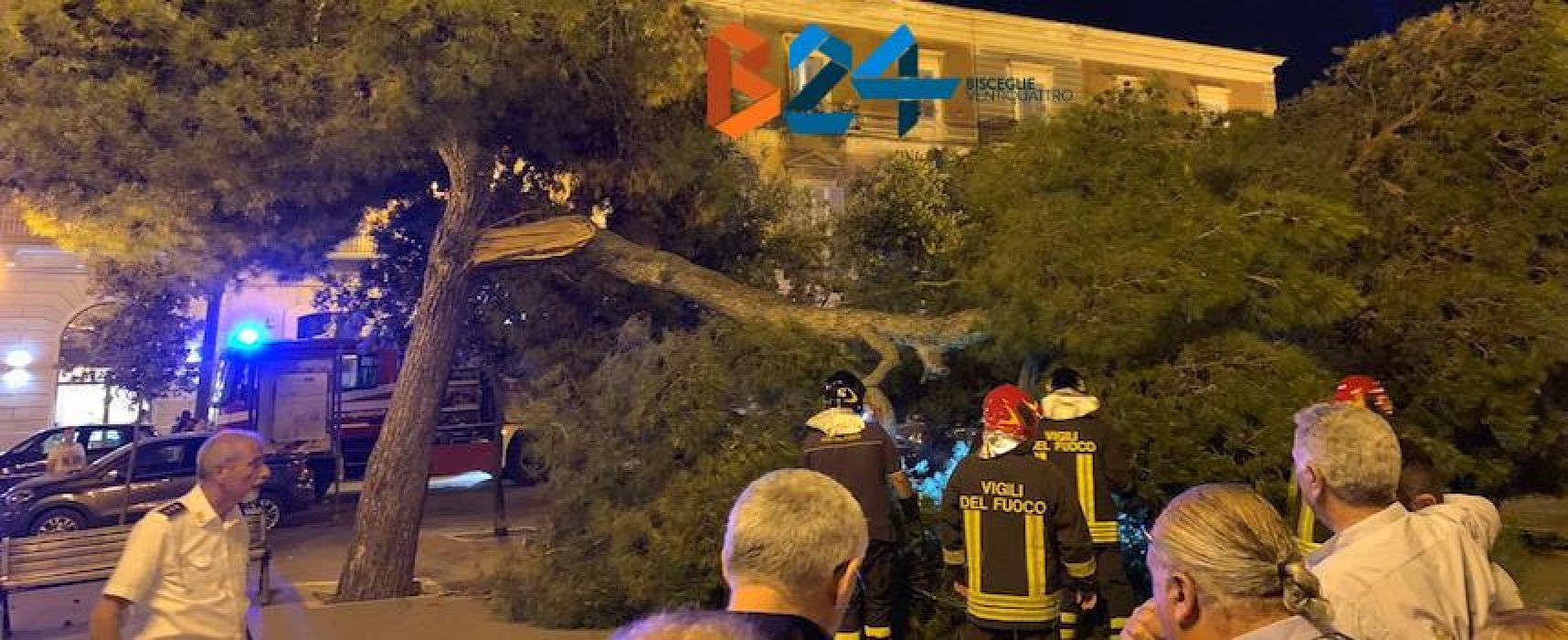 Grosso ramo cade in piazza Vittorio Emanuele / FOTO