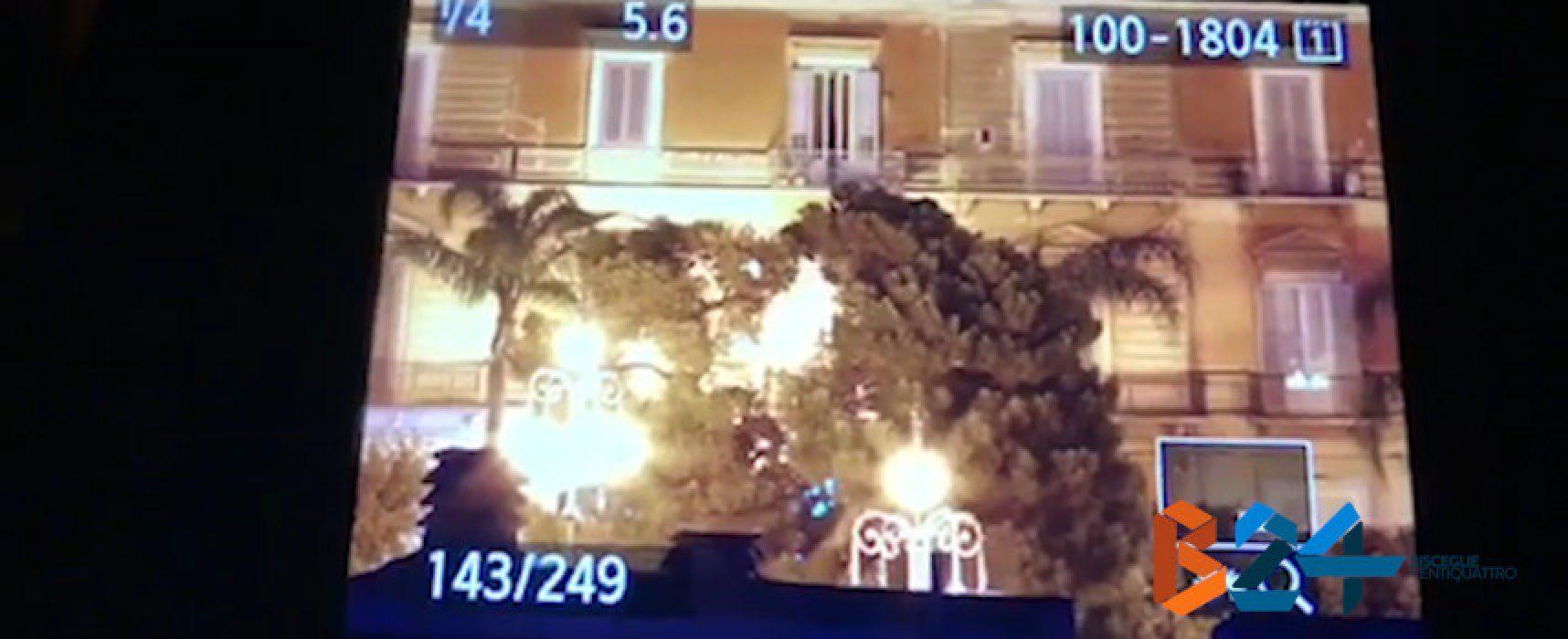 Immortalata la caduta del ramo di pino al Palazzuolo /VIDEO