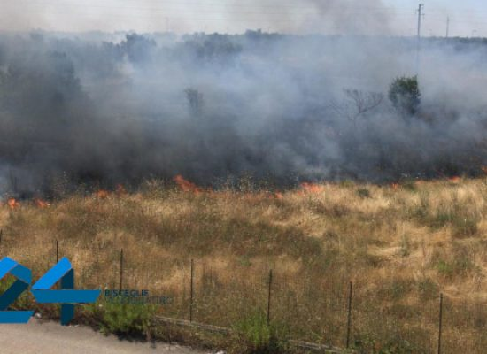 Vasto incendio si propaga in zona Lama di Macina / VIDEO