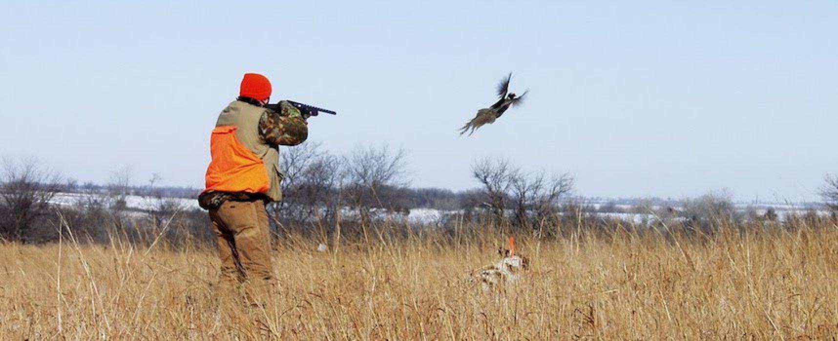 Il Consiglio di Stato sospende stagione caccia in Puglia fino al 24 ottobre