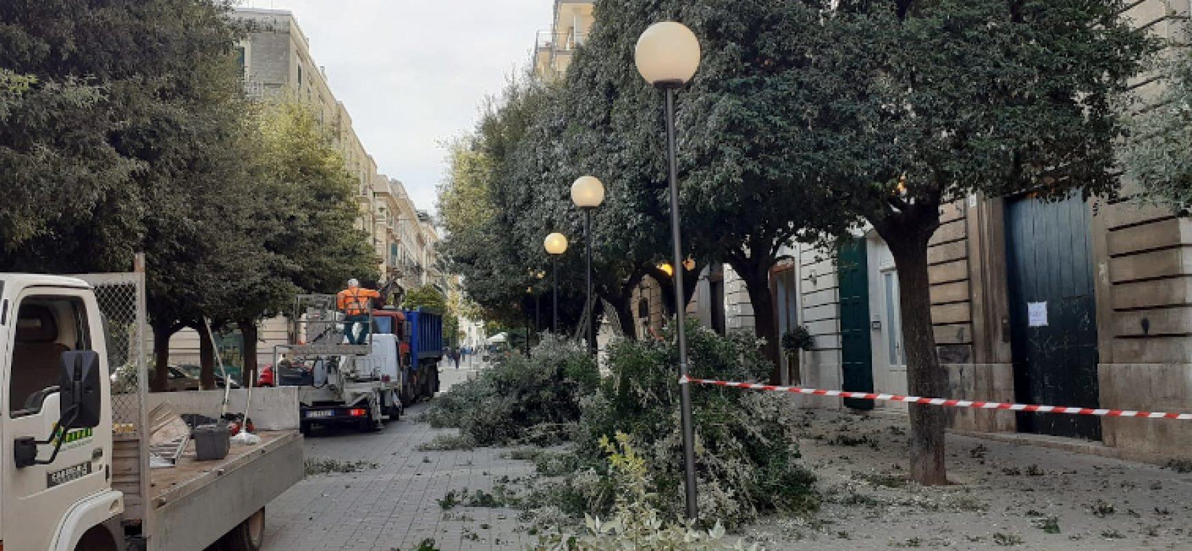 """Interventi di potatura alberi in tutta la città, Natale Parisi: """"Si proseguirà sino a marzo"""""""