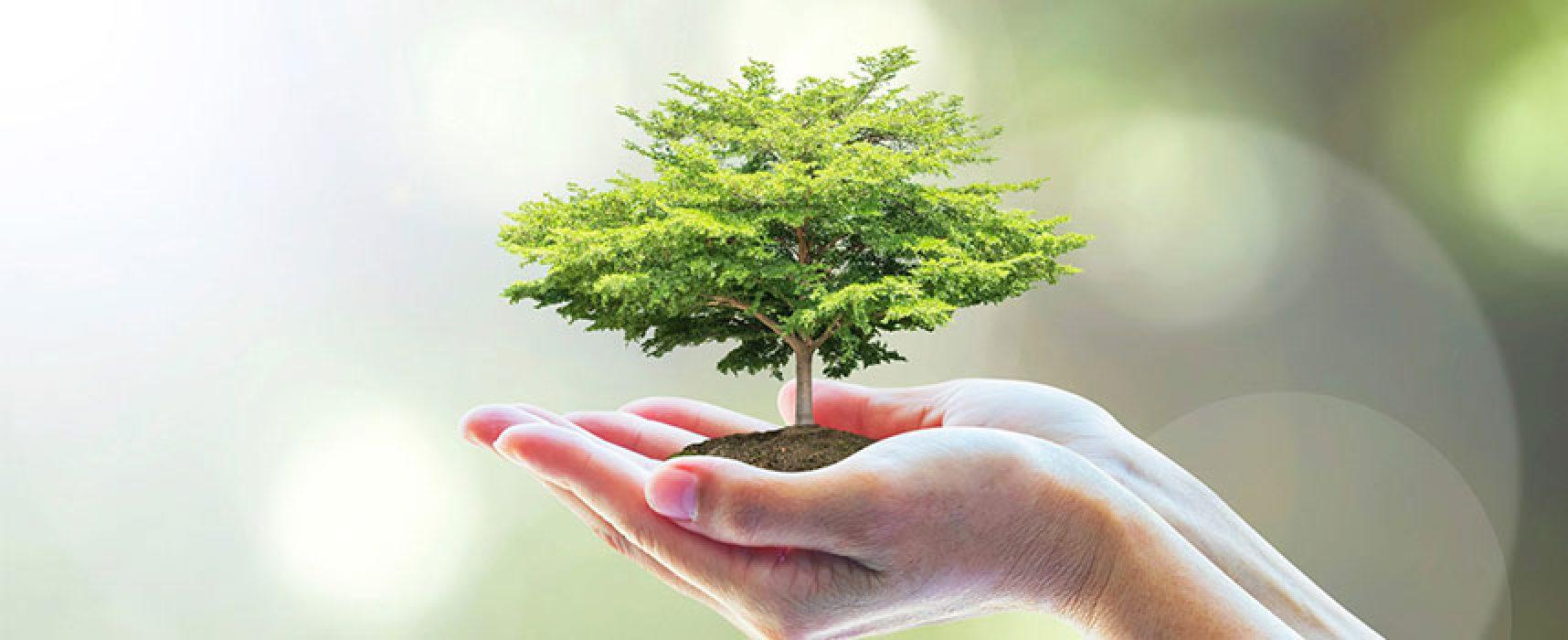 """L'appello di Pro Natura:  """"Amministrazione pianti un albero per ogni nato"""""""
