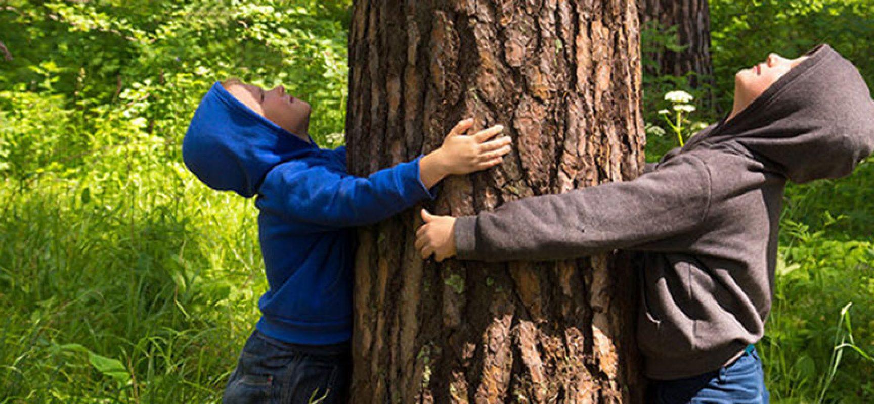 Giornata nazionale degli alberi: a Bisceglie nuove piantumazioni in diverse zone