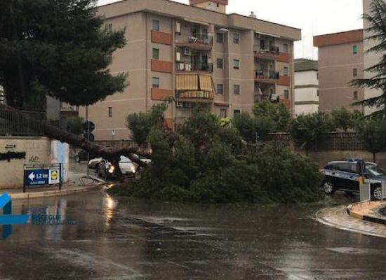 Maltempo: albero cade su rotatoria in via ing. Albrizio