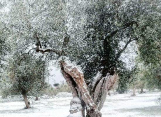 Gelate marzo, Regione avvia iter per accertamento danni a strutture agricole e raccolti
