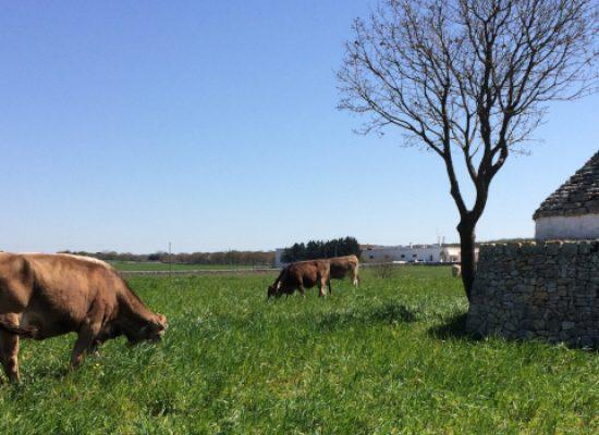 """Coronavirus, Copagri Puglia: """"Zootecnia, florovivaismo e ortofrutta in difficoltà"""""""