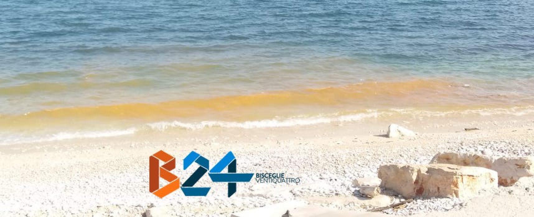 Chiazza arancione in mare alla spiaggia del Pretore: ipotesi Noctiluca scintillans