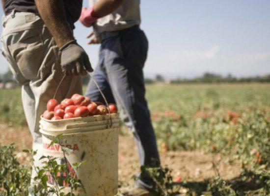 """Flai Cgil Bat: """"Nessun problema manodopera in agricoltura. Urgenti sono trasporto e Dpi"""""""