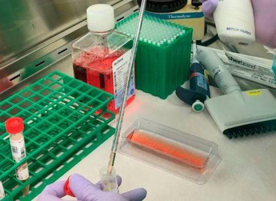 Coronavirus, bollettino regionale: sono 7 i nuovi casi positivi di oggi