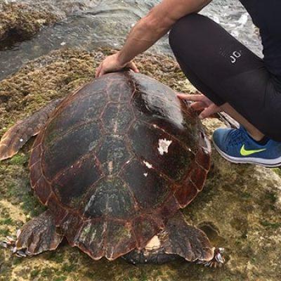 Nuova carcassa di tartaruga ritrovata in zona Paternostro / VIDEO