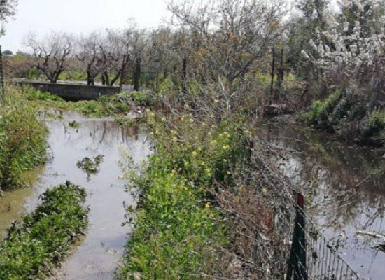 """Bisceglie D'Amare segnala problematiche in zona Lama di Macina, """"Canale inonda terreni con acque nere"""""""