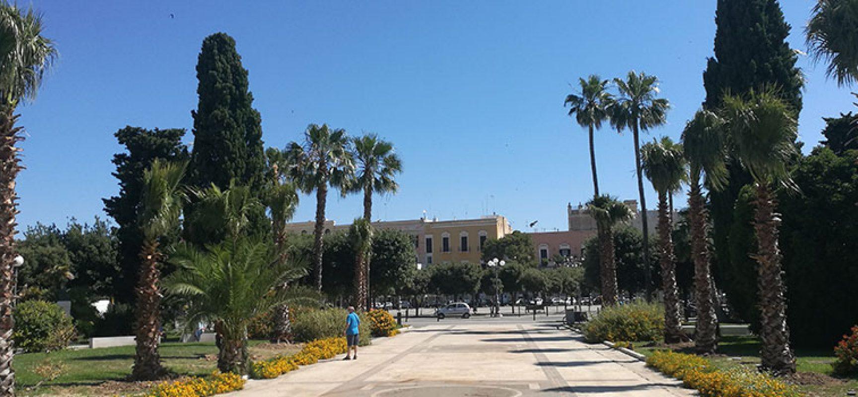 Nuove piantumazioni in piazza Vittorio Emanuele e via sant'Andrea