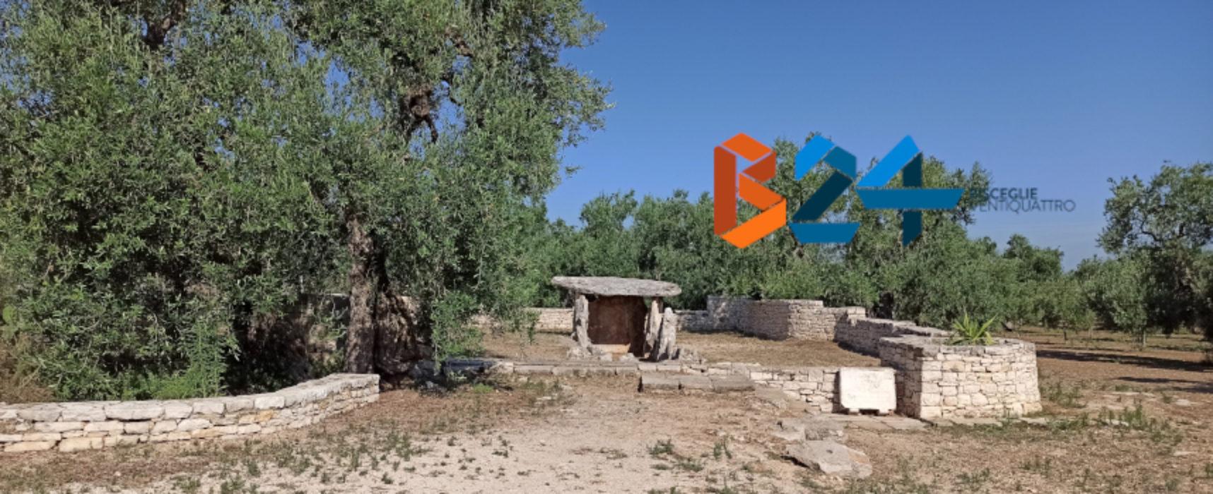 Linea Verde Estate in visita nella Bat / In onda la puntata dedicata a Bisceglie
