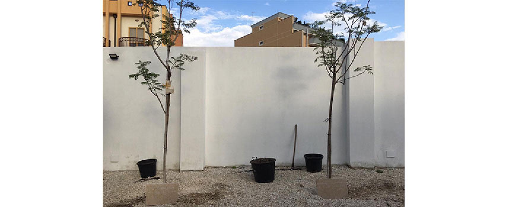 Inaugurato Giardino dei Giusti, messi a dimora primi alberi dedicati a due grandi donne / FOTO