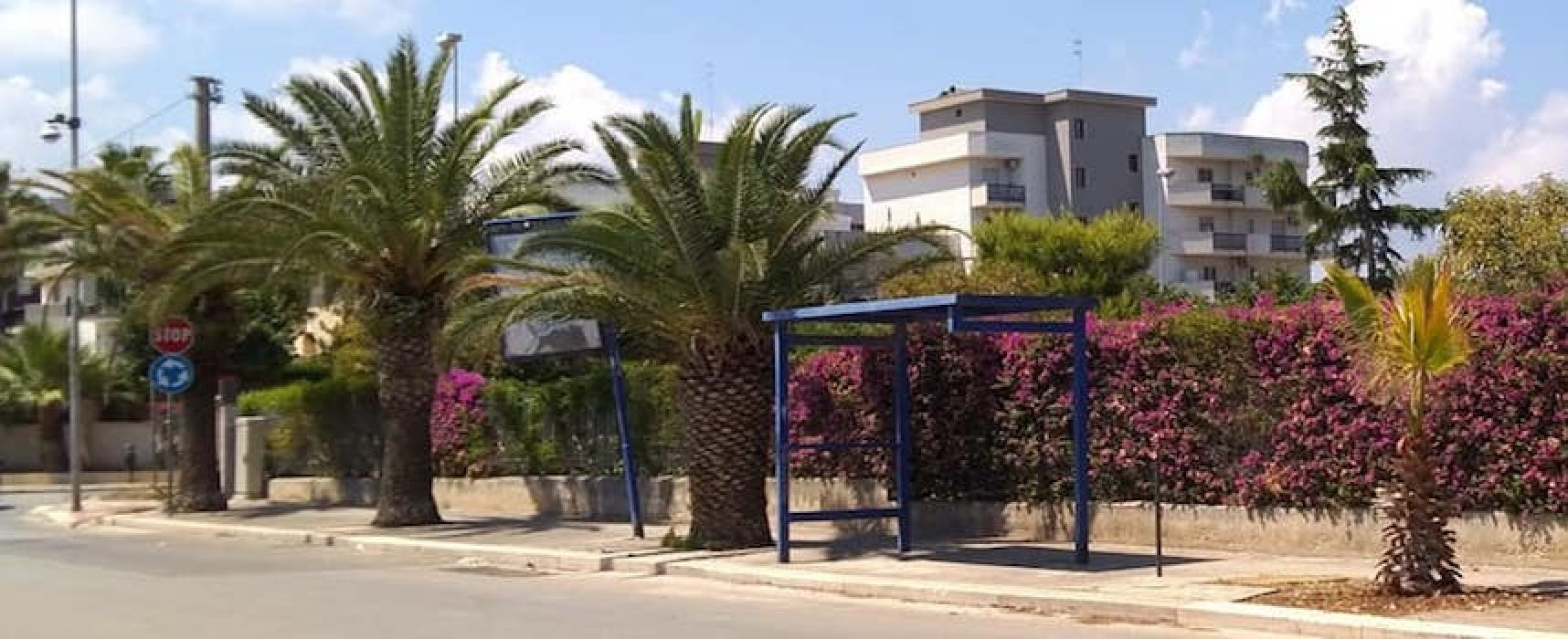 """Palme in via Sant'Andrea, Pro Natura: """"Esteticamente disastrose e marciapiedi impraticabili"""""""