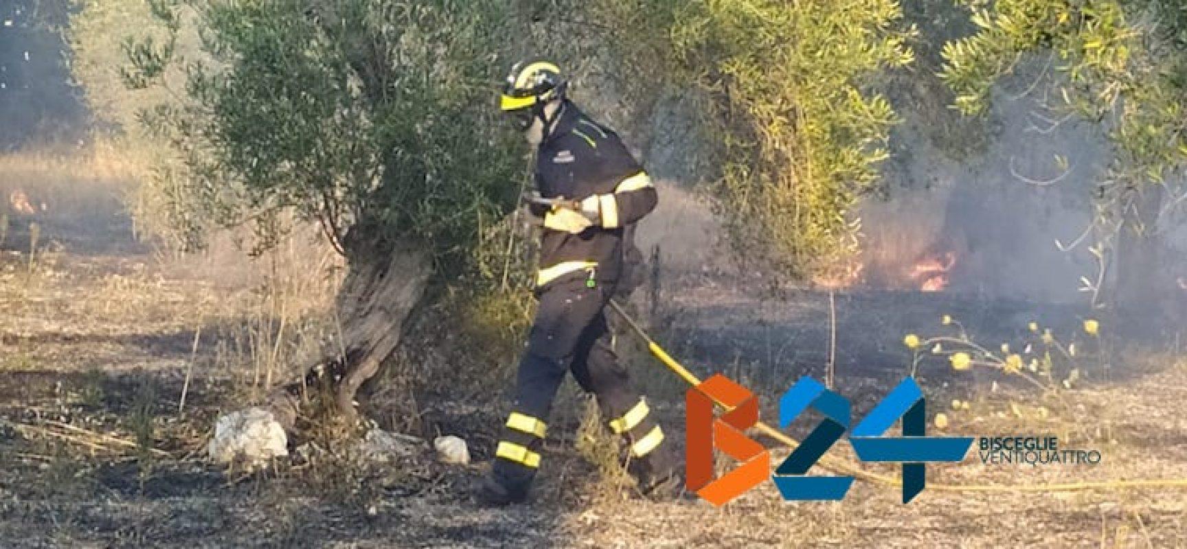 Roghi estivi, due incendi nelle ultime ore: in fiamme anche un oliveto / FOTO