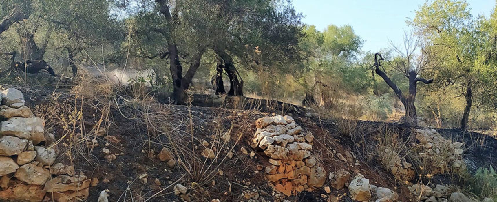 Vasto incendio in zona Santa Croce, a fuoco alcuni ettari di uliveto / FOTO
