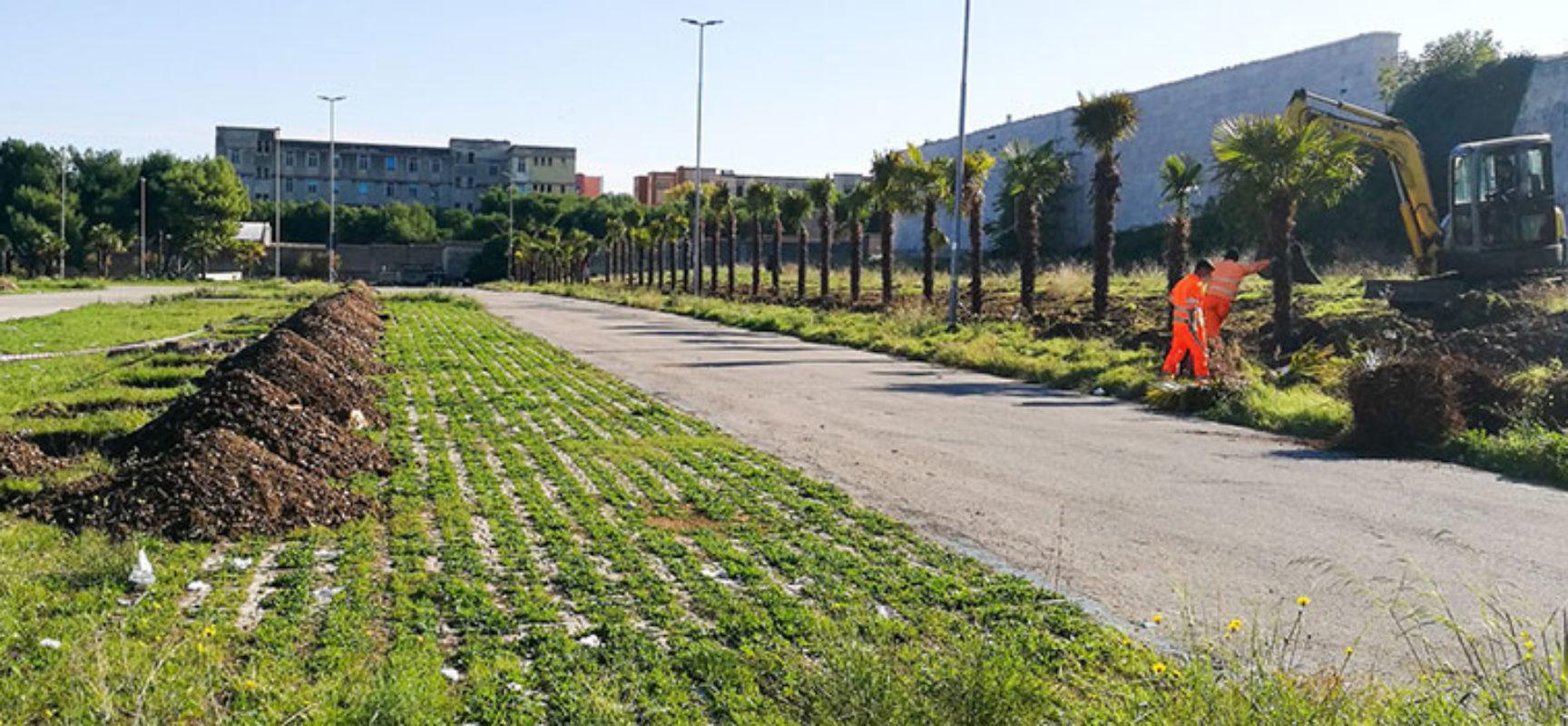 """Angarano: """"Stiamo procedendo con piantumazione di 170 palme a conca di Monaci"""""""