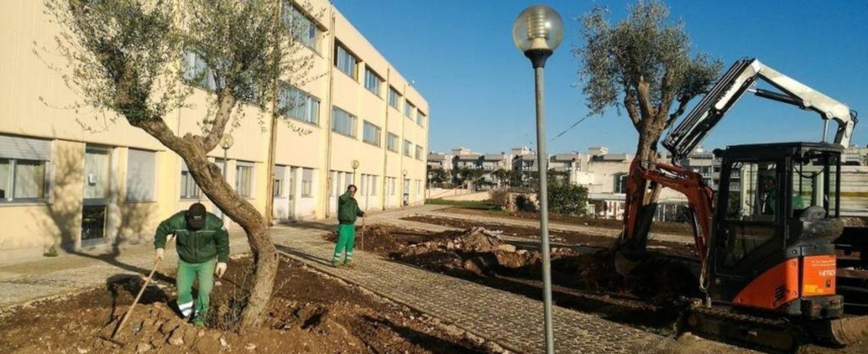 """Angarano: """"Continuiamo ad abbellire e rendere confortevoli le nostre scuole"""" / FOTO"""