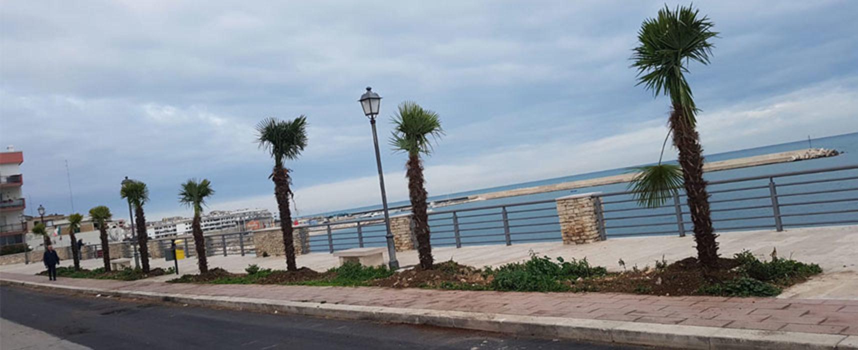"""Angarano: """"Continua rivoluzione verde, da giugno piantate 360 palme in tutta la città"""" / FOTO"""