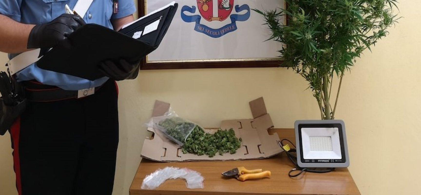 Minore arrestato per detenzione di marijuana: in casa  piccola serra artigianale