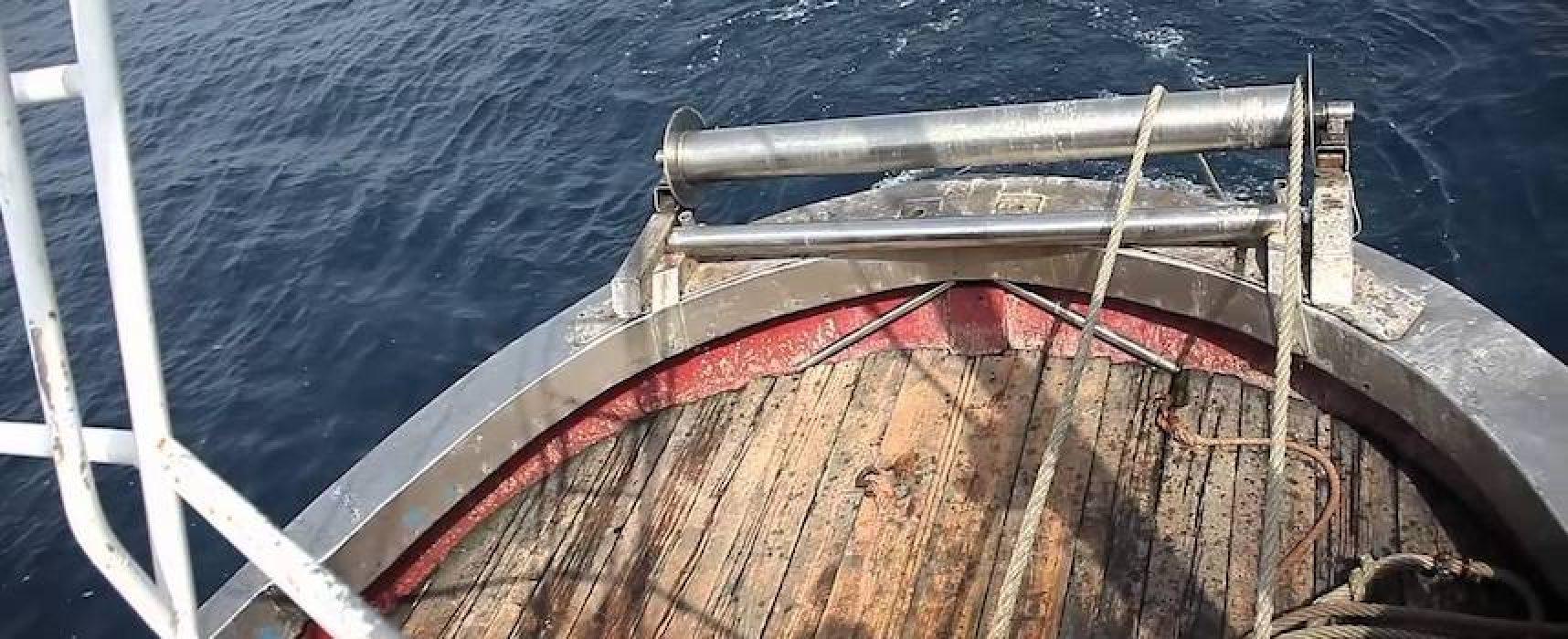 Piano di Azione per miglioramento pesca gambero bianco, oggi presentazione a Bari