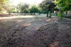 Manutenzione verde giardino dei giusti 5