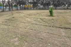 Manutenzione verde scuola carrara gioia 2